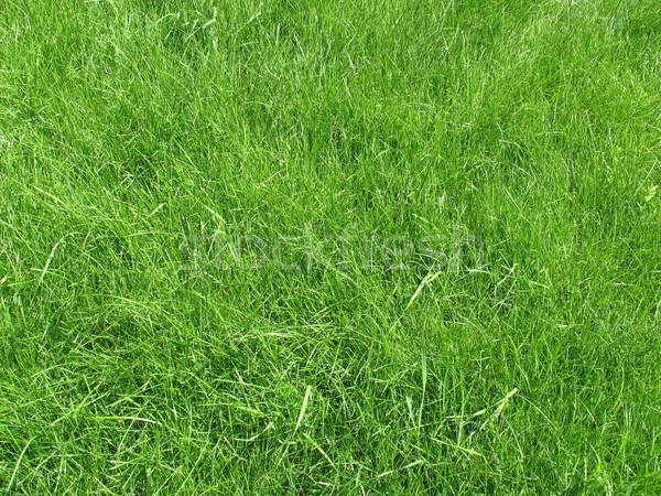Yeşil ot alan taze doku çim bahçe Stok fotoğraf © Volina