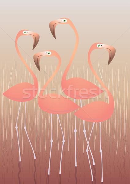 Four Flamingos Illustration Stock photo © VOOK