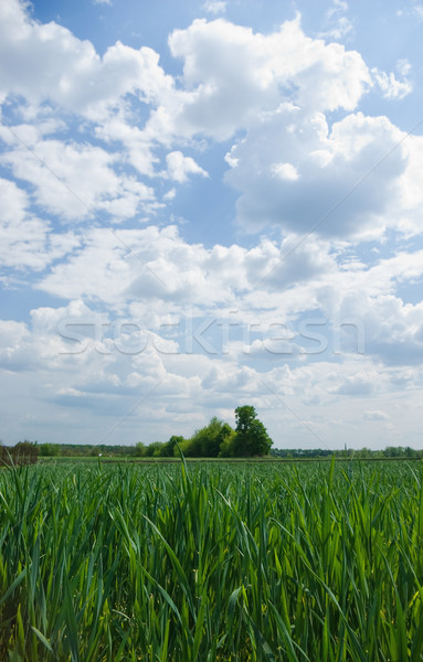 Yeşil alanları manzara mavi gökyüzü beyaz bulutlar Stok fotoğraf © vrvalerian