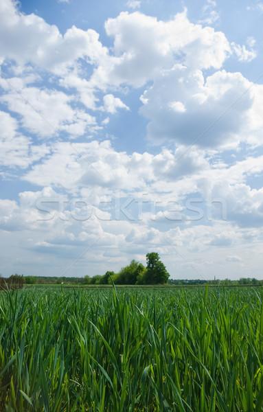 Verde campos paisaje cielo azul blanco nubes Foto stock © vrvalerian