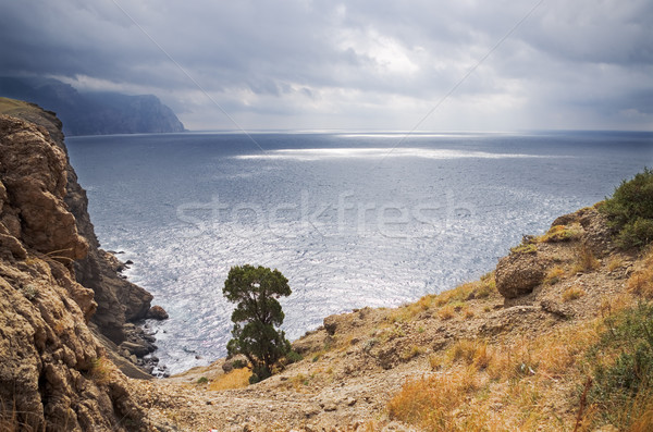 Bergen zee kustlijn pine bomen reserve Stockfoto © vrvalerian