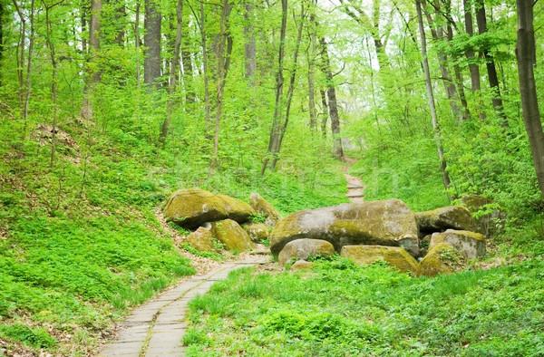 Bos weg licht blad groene kleur Stockfoto © vrvalerian