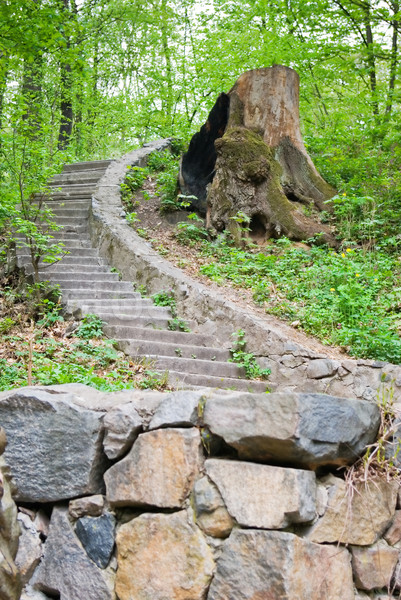 Bos weg licht blad groene Stockfoto © vrvalerian