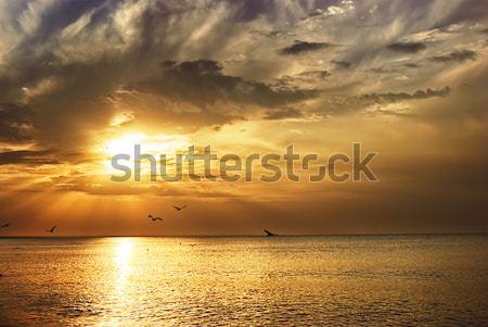 Nascer do sol mar de manhã cedo aves praia nuvens Foto stock © vrvalerian
