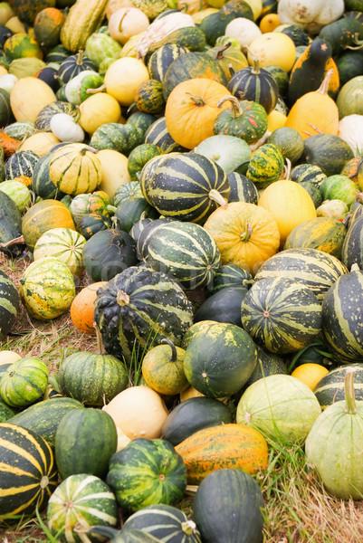 Tökök zöldségek aratás összes narancs ősz Stock fotó © vrvalerian
