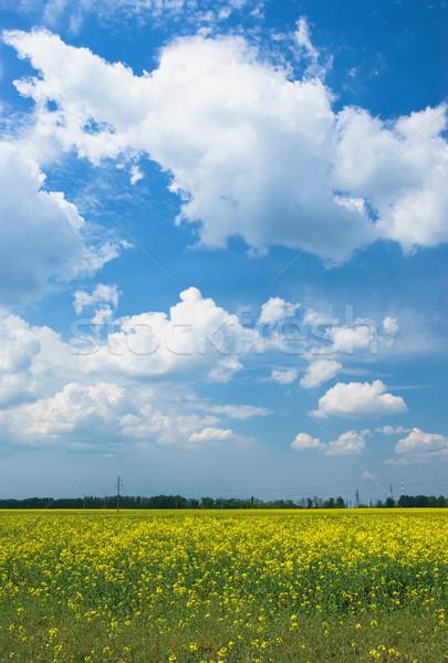 Foto stock: Prado · paisagem · verde · campos · blue · sky · branco