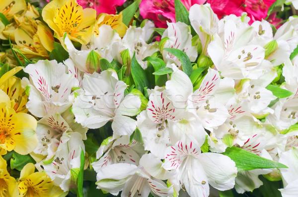 Stockfoto: Bloemen · mooie · boeket · kleurrijk · blad · Rood