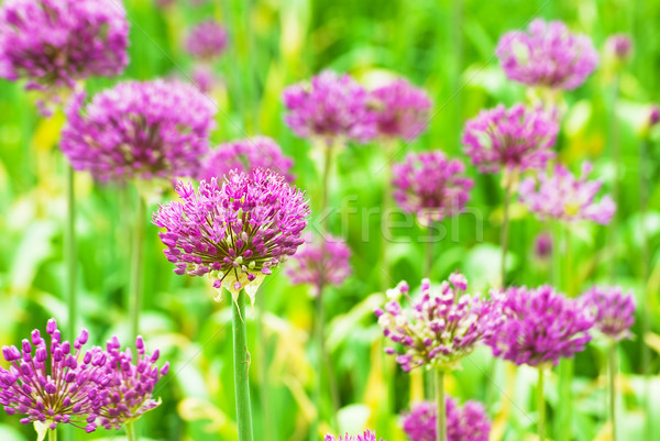 Stock fotó: Közelkép · tele · virágzik · virág · földgömb · természet