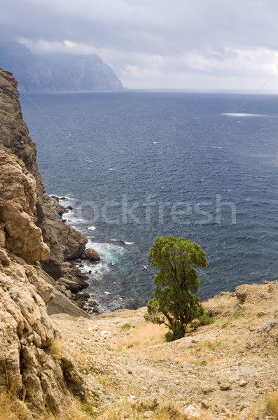 Foto stock: Montanhas · mar · pinho · árvores · reserva