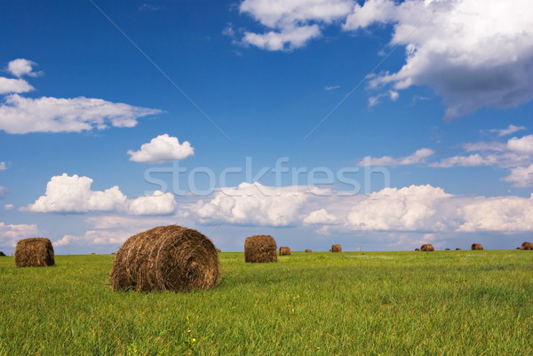 Paja campo cielo azul alimentos hierba verano Foto stock © vrvalerian