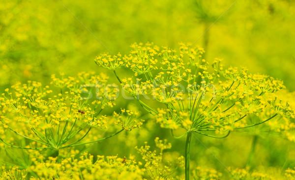 Stockfoto: Bloei · abstract · tuin · zomer · geneeskunde · mier