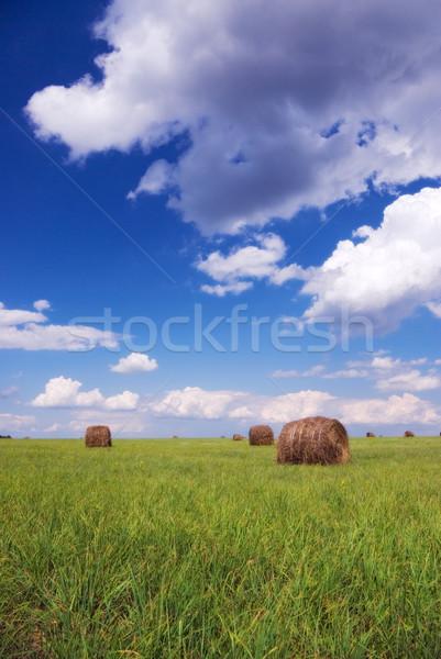 Palha campo blue sky comida grama verão Foto stock © vrvalerian