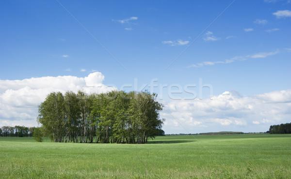 Verão paisagem arbusto blue sky árvore primavera Foto stock © vrvalerian