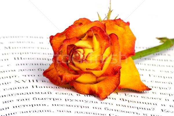 Rosa livro aberto flor amor natureza beleza Foto stock © vrvalerian