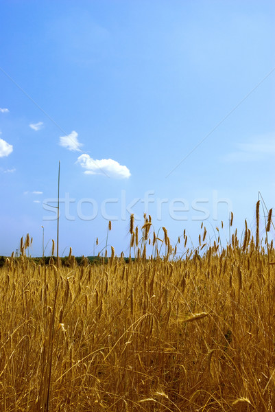 Stockfoto: Blauwe · hemel · hemel · voedsel · natuur · achtergrond