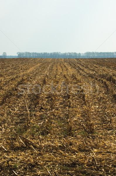 Stockfoto: Veld · tarwe · weg · voedsel