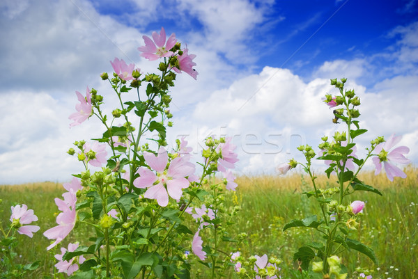 Vad gyönyörű virágok növekvő csoport növények Stock fotó © vrvalerian