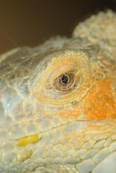 Oog macro leguaan detail zon huid Stockfoto © vrvalerian