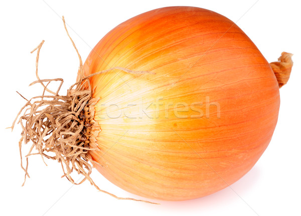 Large onion over white Stock photo © vtls