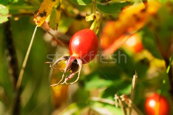 Rood desktop behang vruchten groene Stockfoto © vtls