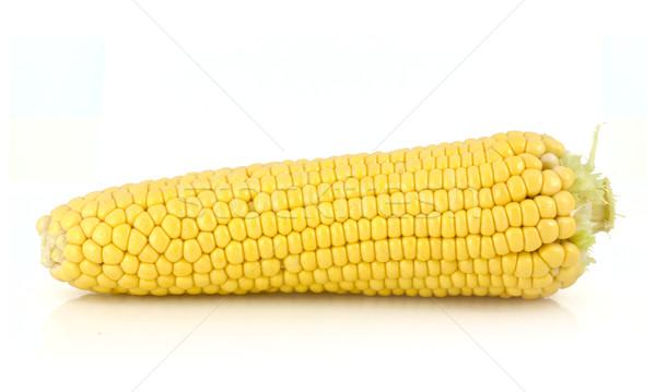 Corn Stock photo © vtorous