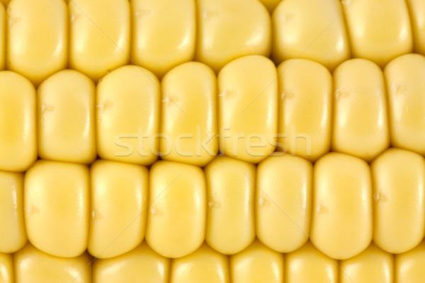 Corn Stock photo © vtorous