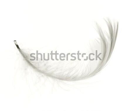 Witte veer geïsoleerd abstract engel vogels Stockfoto © vtorous