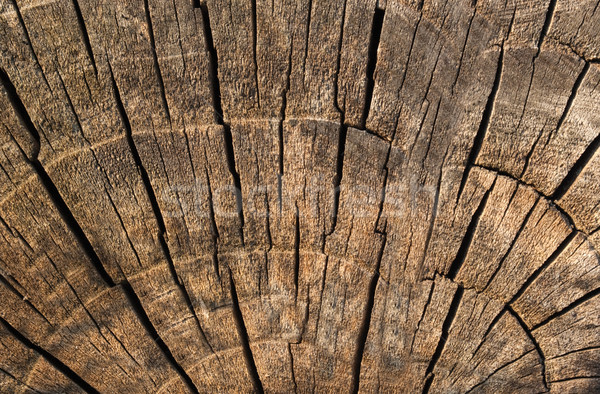 Old log texture Stock photo © vtorous