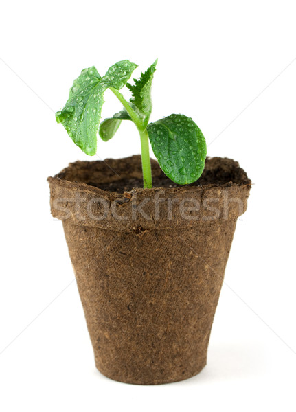 Small plant Stock photo © vtorous