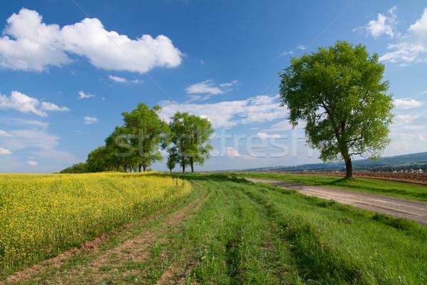 árboles campo violación cielo árbol hierba Foto stock © vtorous