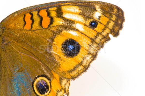 Mariposa ala foto hermosa blanco fondo Foto stock © vtupinamba