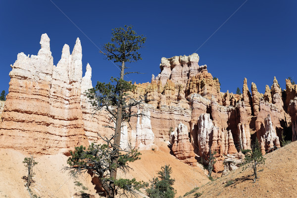 view of Navajo Trail in Bryce Canyon Stock photo © vwalakte