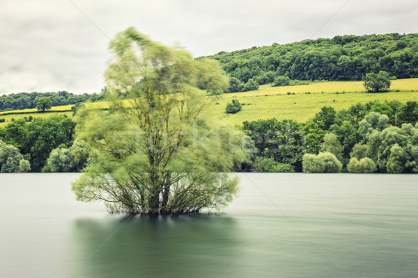 tree in the water Stock photo © vwalakte