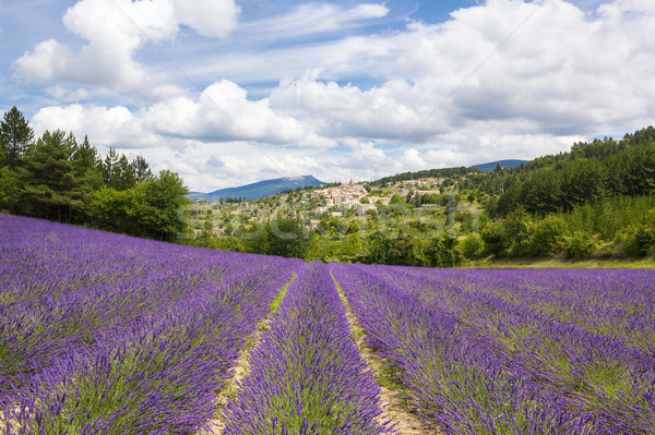 Lavender field and village Stock photo © vwalakte