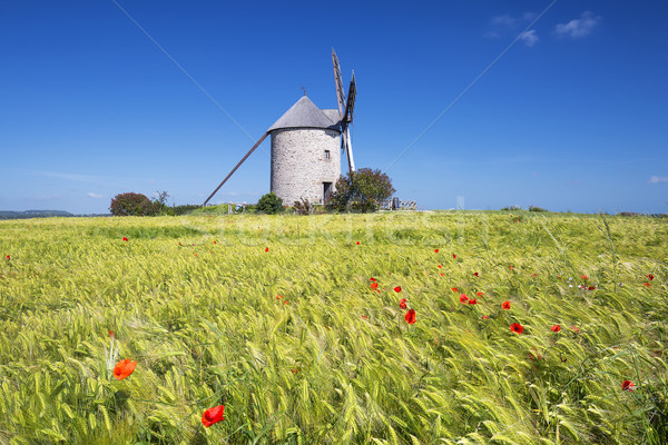 View of Windmill and wheat field Stock photo © vwalakte