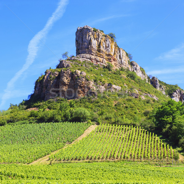 Solutre Rock with vineyards in Burgundy Stock photo © vwalakte