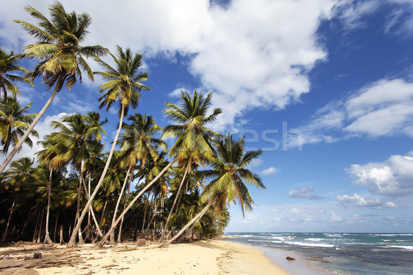 caribbean beach with palm trees Stock photo © vwalakte