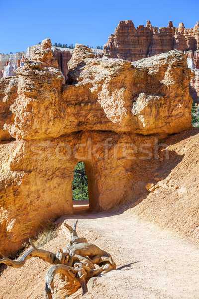 Lopen boog canyon park natuur landschap Stockfoto © vwalakte