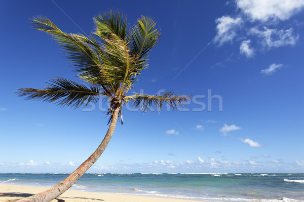 palm tree spirit Stock photo © vwalakte
