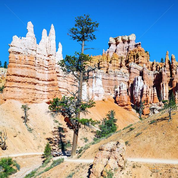 Hoodoo rock spires of Bryce Canyon Stock photo © vwalakte