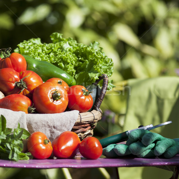 Different fresh vegetables and secateurs Stock photo © vwalakte