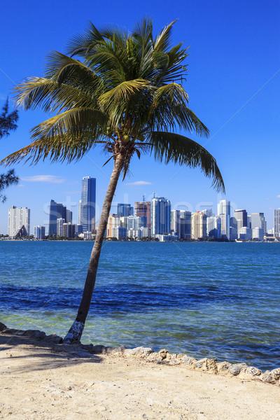 Florida stijl Miami skyline palmboom zon Stockfoto © vwalakte