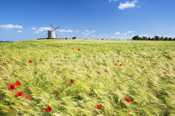 Windmill and wheat field Stock photo © vwalakte