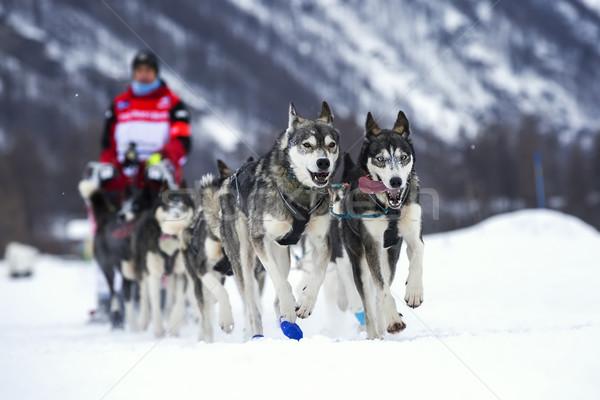 Kutya verseny hó Franciaország Európa mező Stock fotó © vwalakte