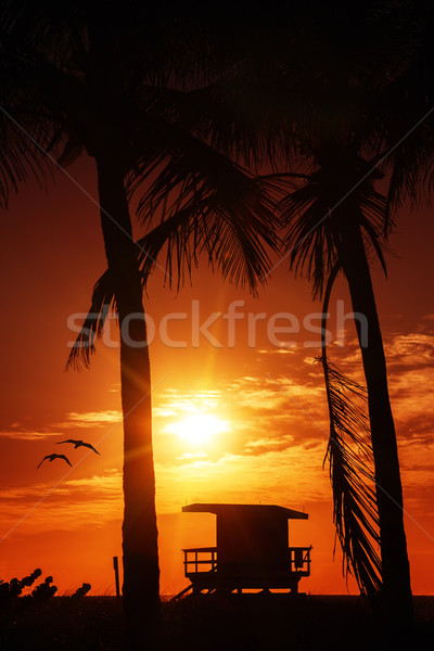 Miami zuiden strand zonsopgang badmeester toren Stockfoto © vwalakte
