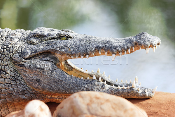 dangerous mouth Stock photo © vwalakte