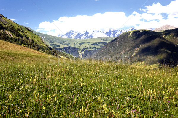 Savoy Alps-Europe in summer Stock photo © vwalakte