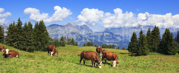 Panoramic view of french Alps Stock photo © vwalakte