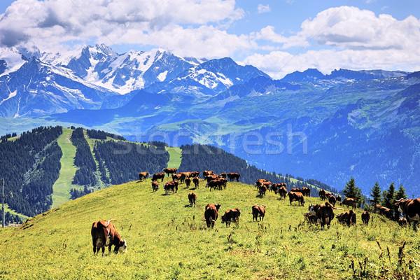 Alpine inekler manzara Fransa yaz gökyüzü Stok fotoğraf © vwalakte