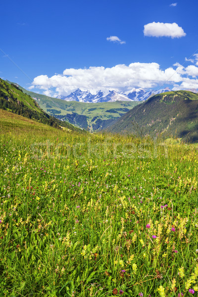 french Alps in summer Stock photo © vwalakte